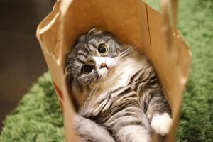 袋の中のネコ